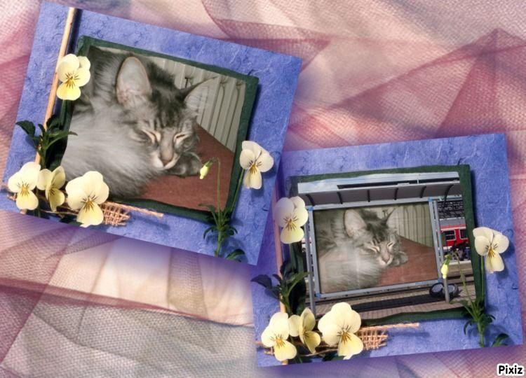 Pixiz Montage Photo